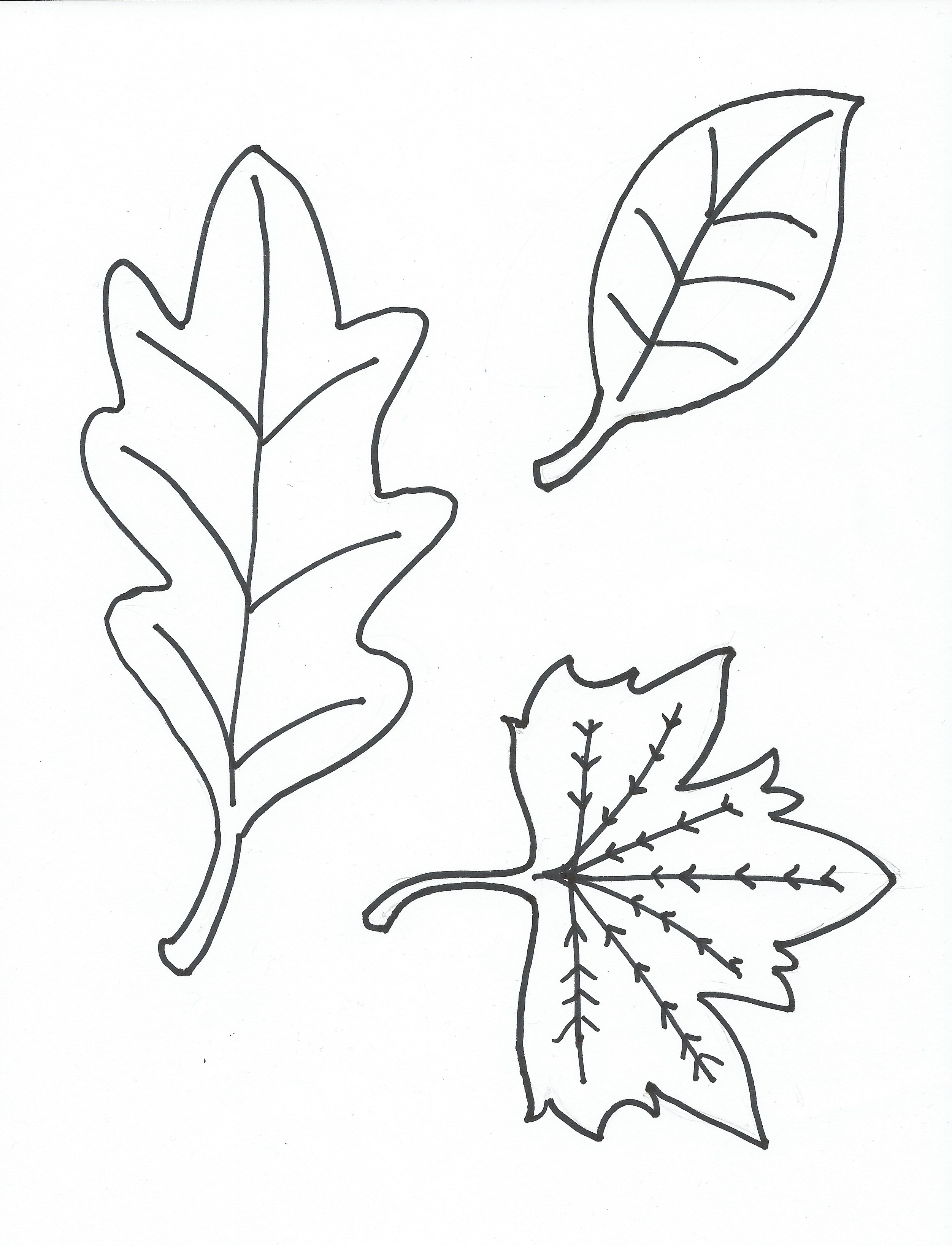 Free Coloring Pages Of Leaves Without Colour